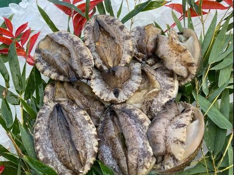 瀬戸内海 大サイズアワビ 海鮮 BBQ 網焼き 漁師 貝類刺身活かし 海鮮