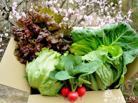 ✿春を知らせに来ました✿春キャベツとお野菜詰め合わせ