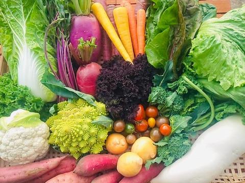 【お試しS】たてやまかおり菜園の『春の野菜セットS6品目』