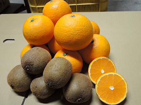 ☆和歌山産☆2種セット/ 清見 2kg  + キウイ 0.5kg(追熟必要)