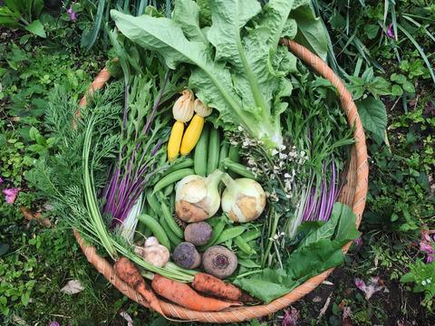 カトリケの季節の野菜セット(8〜10品目)