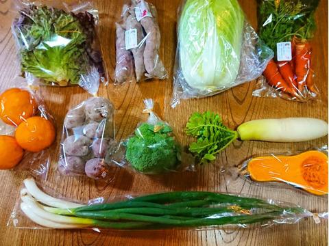 採れたて旬の野菜セット(5〜6品)に、お得なお試し「自然薯」