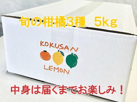 旬の柑橘3種のセット5kg (みかん系の柑橘が入ることが多いです)