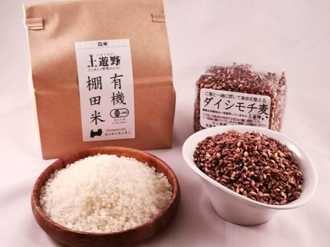 【送料お得】有機棚田米5㎏とダイシモチ1㎏《農薬化学肥料一切不使用栽培のモチ麦》
