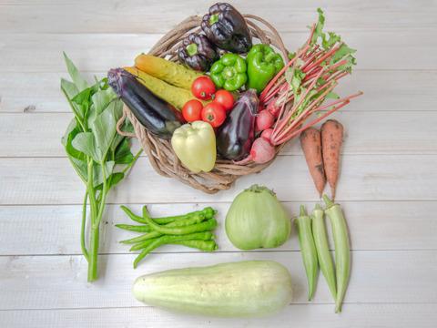 【自然栽培&固定種のみ!!】『まえむき。』の、自然と一緒に育てた旬の野菜セット8~9種類