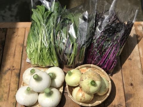 京都産 新玉ねぎ2種と葉物野菜3種セット【漢方栽培】・有機肥料使用