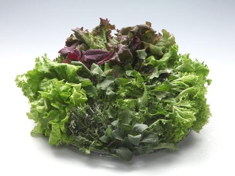 【たくさん使用されるお客様に】【無農薬栽培】富山の植物工場野菜1kg×5+ベビーリーフミックス5袋付【グリーンリーフ/フリルレタス】