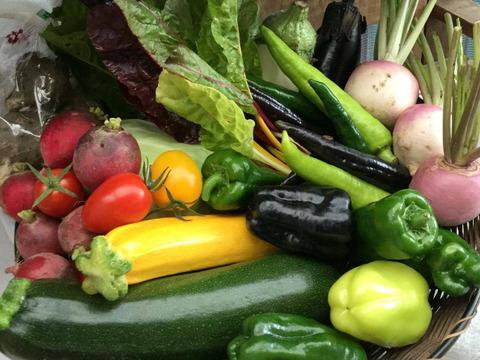 旬こそ命!旬の野菜セット*5品目以上=少人数用~農薬/化学肥料・不使用