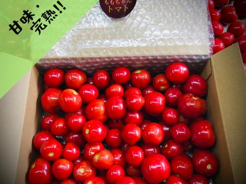 """【まるでフルーツ!薄皮新食感!】""""ももちゃんトマト""""(1kg)"""