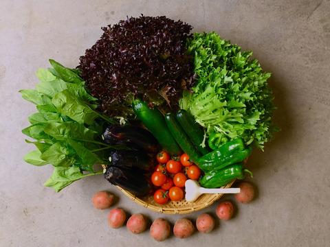 ⭐️本物のオーガニック⭐️京都大原の里山棚田育ち*露地有機野菜*【必ず10品】有機JASの旬野菜BOX