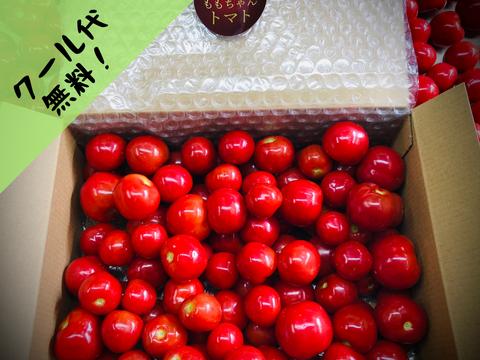 """随時発送【まるでフルーツ!薄皮新食感!】""""ももちゃんトマト""""(1kg)"""