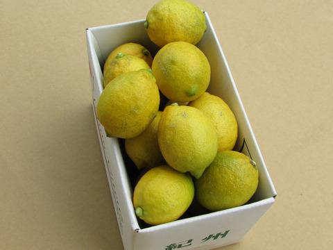 【12月下旬~3月上旬頃まで】和歌山県有田産 レモン(檸檬)*1.8kg