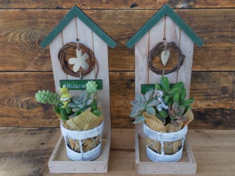 多肉植物のウッドハウス