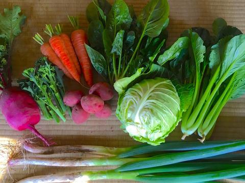 ※リピートの方限定※ 季節のお野菜セット(8〜10品目)小サイズ