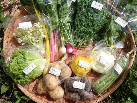 栄養たっぷり!旬の秋採れ野菜丸ごと堪能セット【10品目プラス】