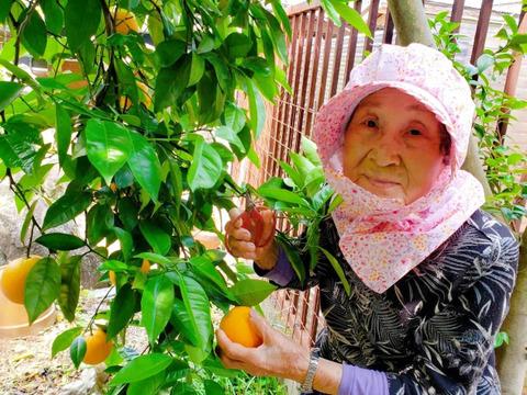 【お試し1㎏】とみこばぁばのバレンシアオレンジ【希少種】