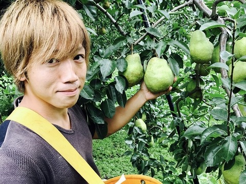 【訳あり洋梨 品種おまかせ!】 約2㎏×2箱 ご家庭用やおすそ分けに丁度いい!R2ー02