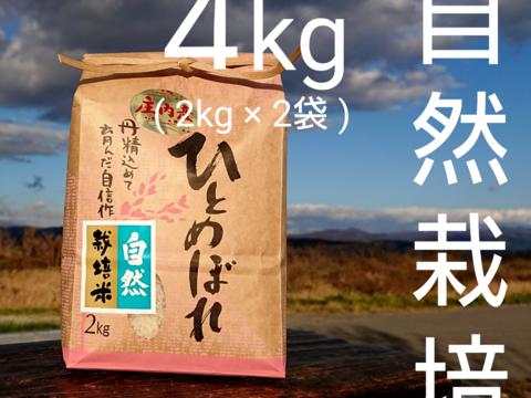 【 無洗米 ・4kg 】米の旨味たっぷり 自然栽培米 ひとめぼれ