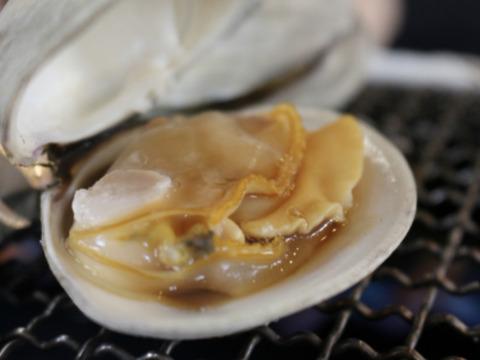 千葉県九十九里地はまぐり 約1キロ入 濃厚な味で焼きはまぐりや酒蒸しに最適です。