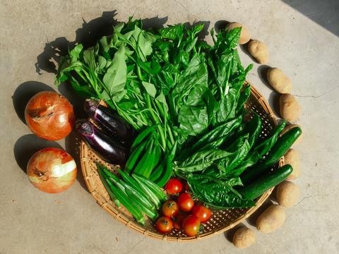 京都大原の棚田で育てた露地有機野菜【必ず10品】有機JASの旬野菜BOX