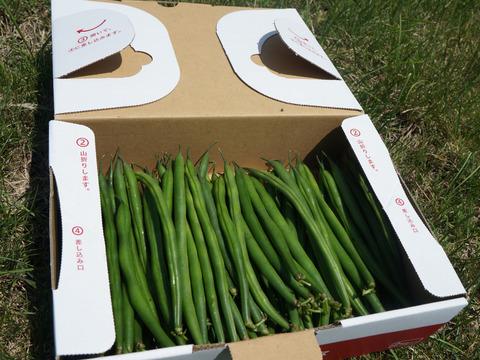 彩りキレイ!保存にも便利!秋田県産 新鮮いんげん豆(500g)