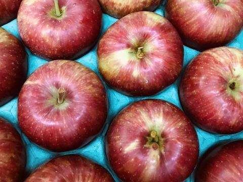 【夏りんご第2弾】緑で渋いシナノレッド3キロ箱8〜14玉 商品ID40750