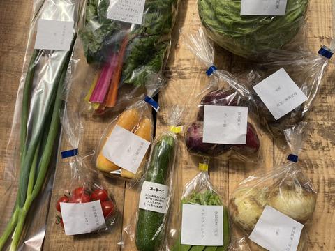 【今だけ200円引】お野菜セットMセット