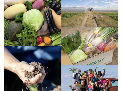 芽吹きのエネルギーたっぷり*MEGLIY金沢の春野菜セット(8〜10品)【すべて農薬不使用】