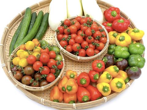 【季節限定】カラフルな野菜!ミニパプリカ(3〜5色/1.5kg)とミニトマト(3〜5色/2kg)とふわとろ白ナス(10本)の詰め合わせ