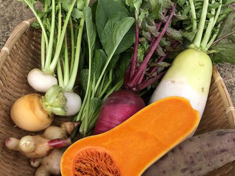 【富士山の麓から】わっぱファームの旬のおまかせお野菜セット(4〜5種)