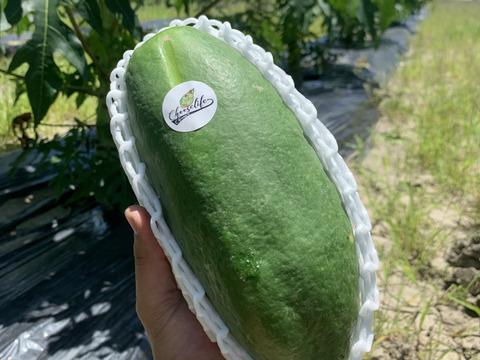 無農薬栽培「青パパイヤ2kg」約2玉~3玉