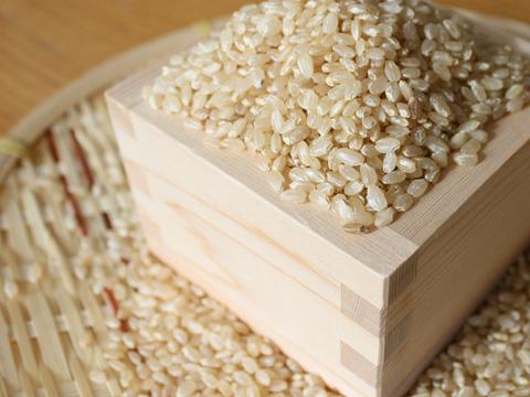 【おまけ付】贈り物に最適!令和2年 新潟県産コシヒカリ 反町の【玄米】はとても食べやすいですよ(10㎏)【熨斗付き】