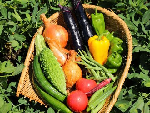 【期間限定でおまけ付き】ナスが大人気!化学農薬・化学肥料不使用栽培の旬の野菜セット【朝採り 5~6品目】