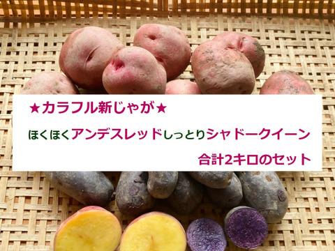 カラフル野菜農家の【60サイズ】★新じゃが2色セット★レシピ付き