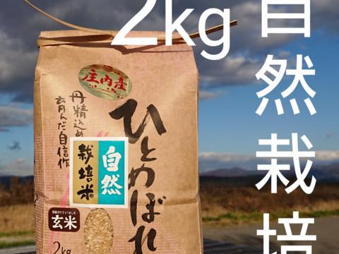 【 玄米・2kg 】米の旨味たっぷり 自然栽培米 ひとめぼれ