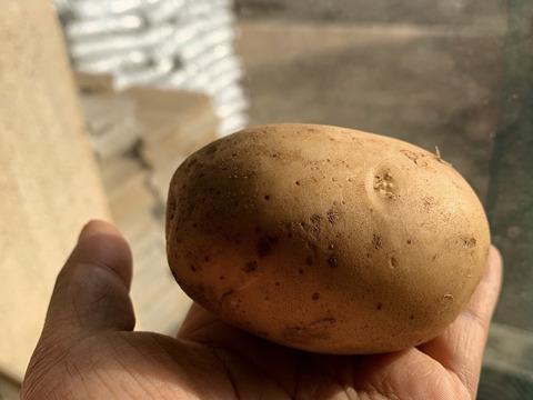 有機栽培むらおかファームの馬鈴薯!西豊10kg  じゃがいもホクホク