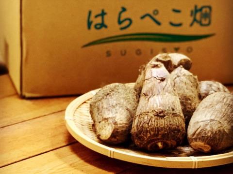 絶品!とろける里芋【とろりん】1.8キロ土付き