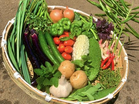 〜8月編〜    1日5箱限定❗️ 夏の野菜セット♪【5品目以上】お試し60サイズ