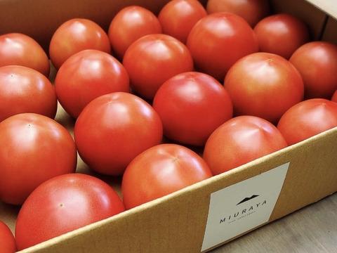 【数量限定予約販売~6/20まで】北海道産大玉トマト『とまのすけ』4㌔(18~24個)【7月中旬~順次発送】