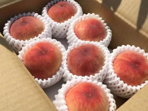 【本州の方向け】山梨の桃 2kg 7月上旬発送開始