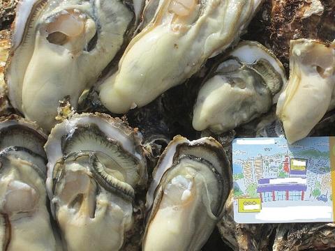 【緊急値下げ】牡蠣 10kg(約135粒)宮城県産 殻付き 牡蠣 殻付き【無選別牡蠣】牡蠣 殻付 カキ 加熱調理用 一年子