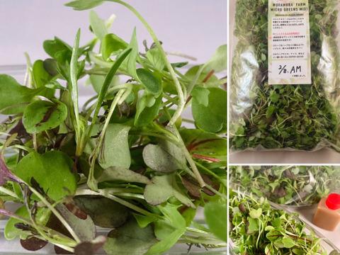 生でシャキッと!わずか10日で収穫する高栄養マイクロリーフ300g