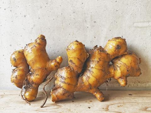 自然栽培 土佐一 囲い生姜500g 土付き