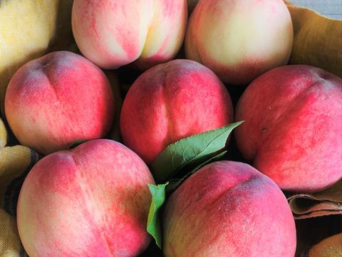 【フルーツの福袋】真夏の果物詰め合わせ!農家のおまかせセット