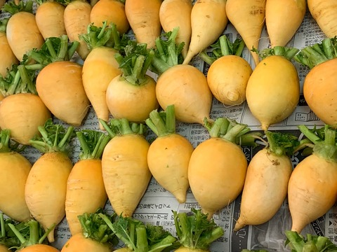 JAS認証 有機栽培 むらおかファームのおまかせ旬の 野菜セット(8~9品目)