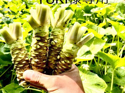 YUKI様専用 葉付き山葵