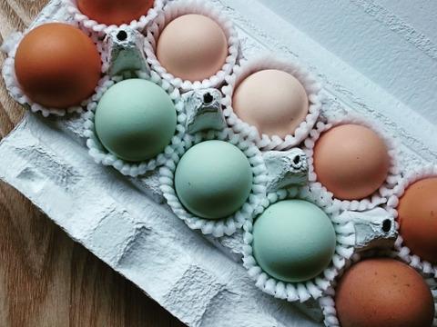 【4セット版】うつしの森のおまかせ卵セット【平飼い有精卵】