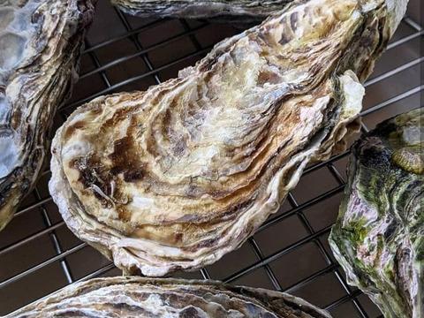 【加熱用】殻付き牡蠣5ヶ+【生食用】むき身300g×2袋