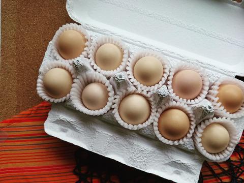 4種の卵?!うつしの森のオールスターズ