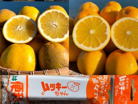 MOTTAINAIみかん!【 食べ比べ 箱込み4kg】和製グレープフルーツ(河内晩柑&紅河内晩柑)